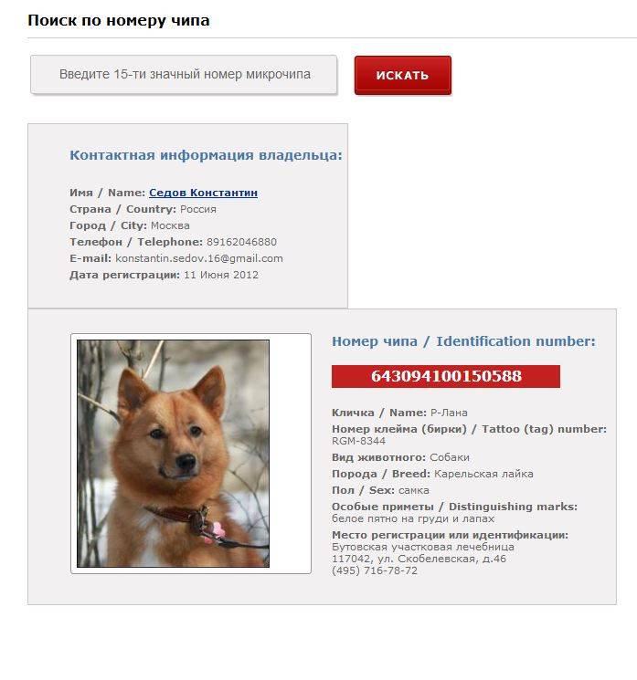 Чипирование собак – вся информация с ценами