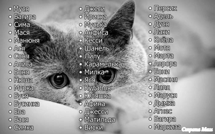 Клички для котов: как можно назвать котенка-мальчика (рыжего, черного, серого, белого и прочее), прикольные, редкие и популярные имена