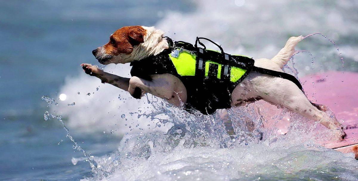 Собаки-спасатели: описание и фото основных пород с краткой характеристикой
