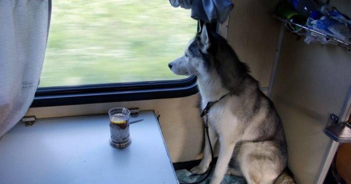 Правила перевозки собаки в поездах дальнего и ближнего следования