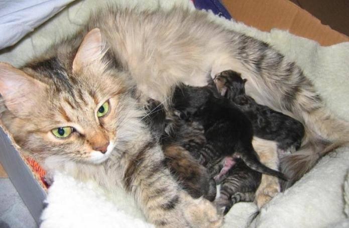 Когда у котят открываются глаза после рождения