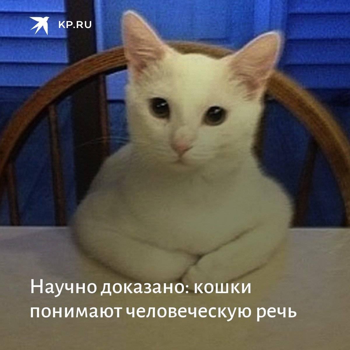 Понимают ли кошки и коты человеческую речь   людей