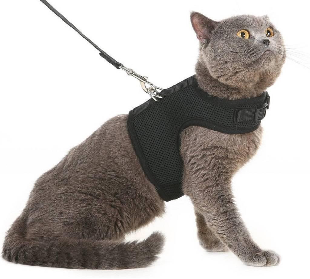 Шлейка для кошки (35 фото): как выбрать кошачий поводок? как приучить к нему кота? можно ли выгуливать котят?