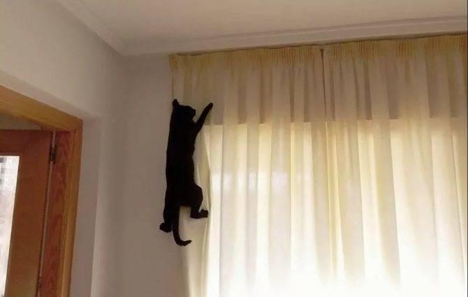 Как отучить кошку лазить по столам — действенные способы, рекомендации специалистов