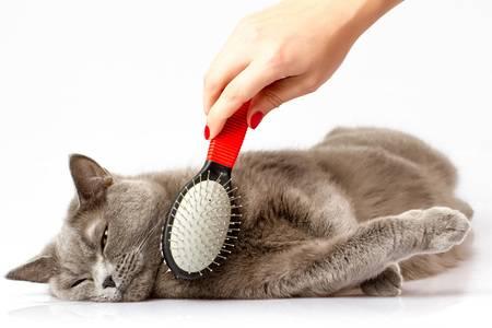 Как правильно вычесывать кошку: частота и техника выполнения