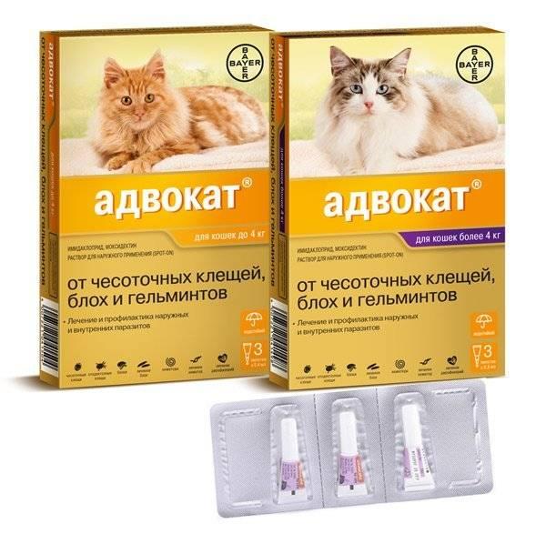 Капли от блох для кошек: как выбрать, инструкция к применению, а также варианты для котят