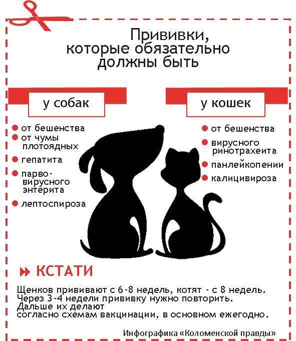 Как растут котята с рождения до года. развитие котенка по неделям и месяцам