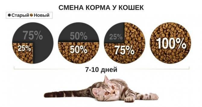 Сухой корм для кошек и котов: вред или польза?