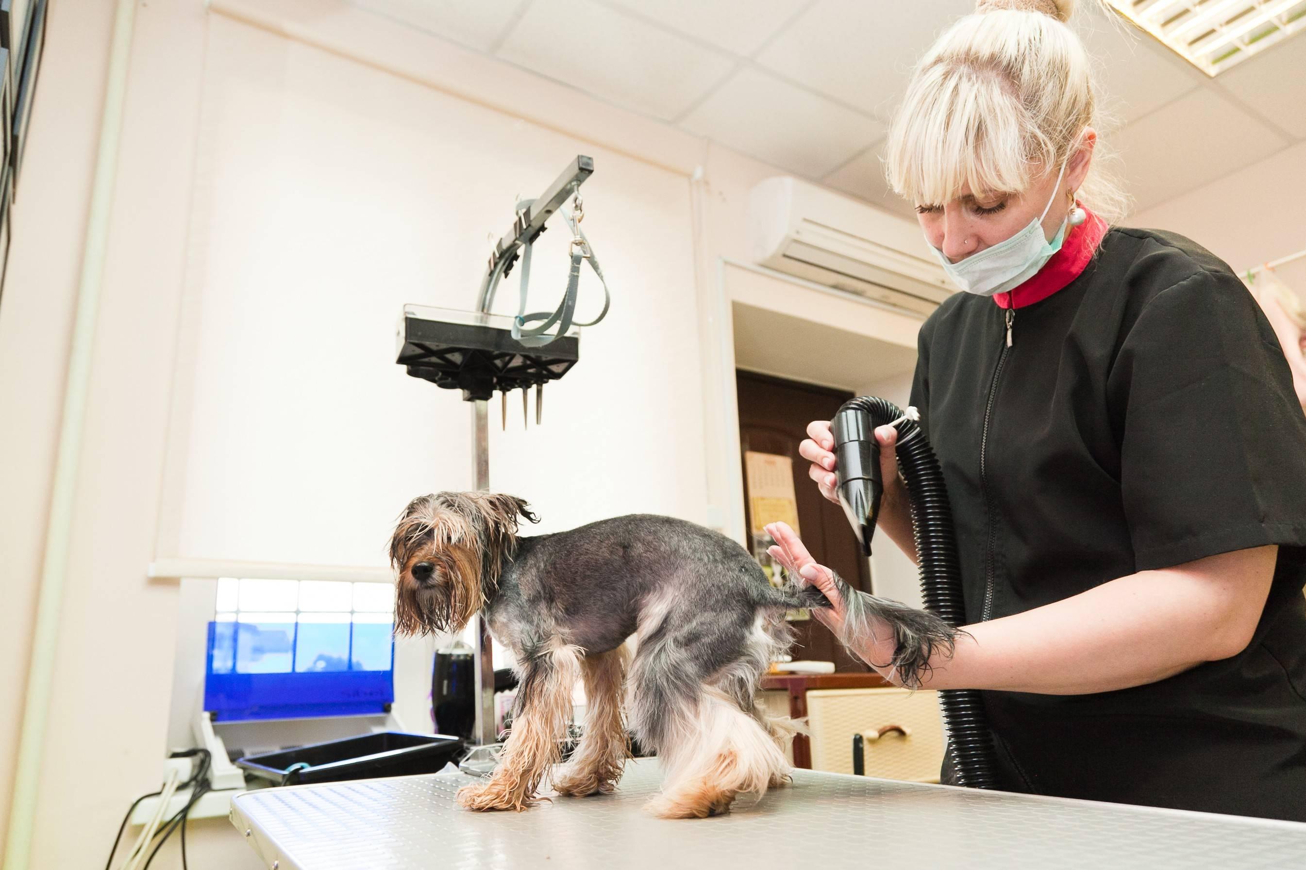 Собачий парикмахер как называется. кто будет вашим клиентом в салоне красоты для собак