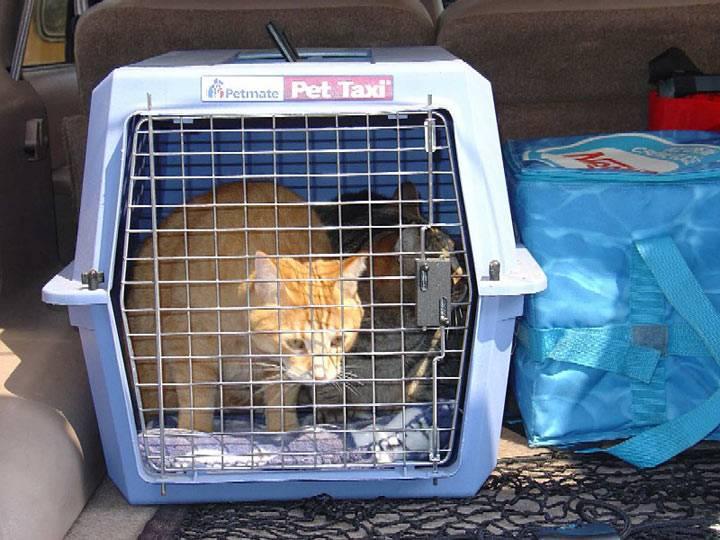 Как перевозить кошку в самолете по россии: правила