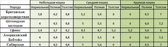 Вес котенка по месяцам: таблица, сколько должен весить, как растут, как выглядят