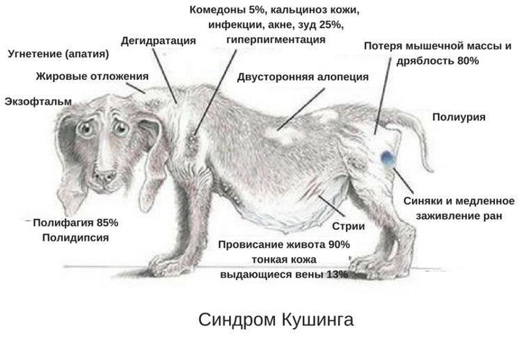 Параанальные железы у собак: воспаление и чистка