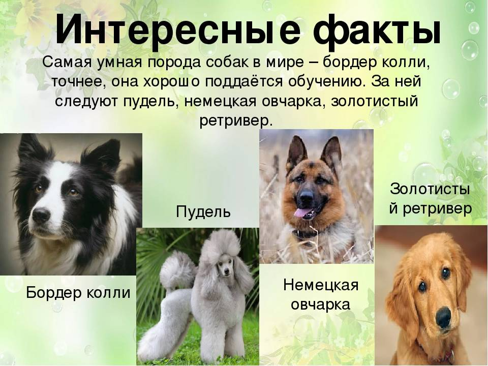 Редкие породы собак: самые необычные в мире