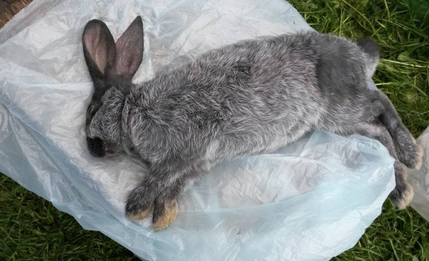 Почему умирают кролики