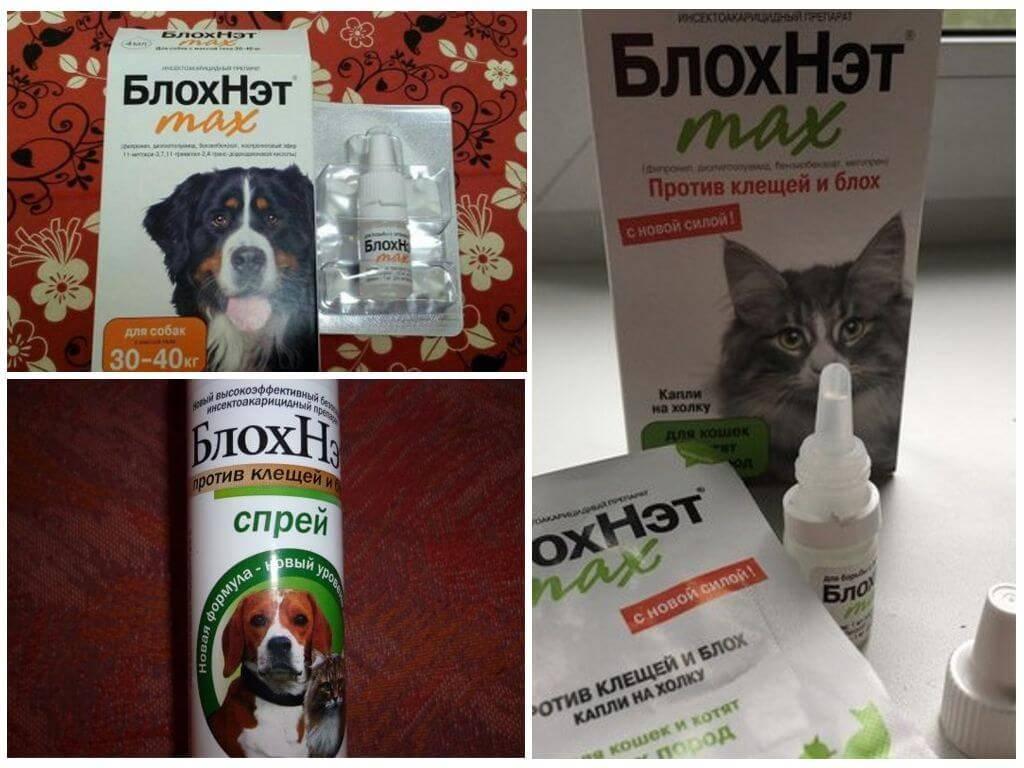 Инструкция по применению капель блохнэт для кошек и собак