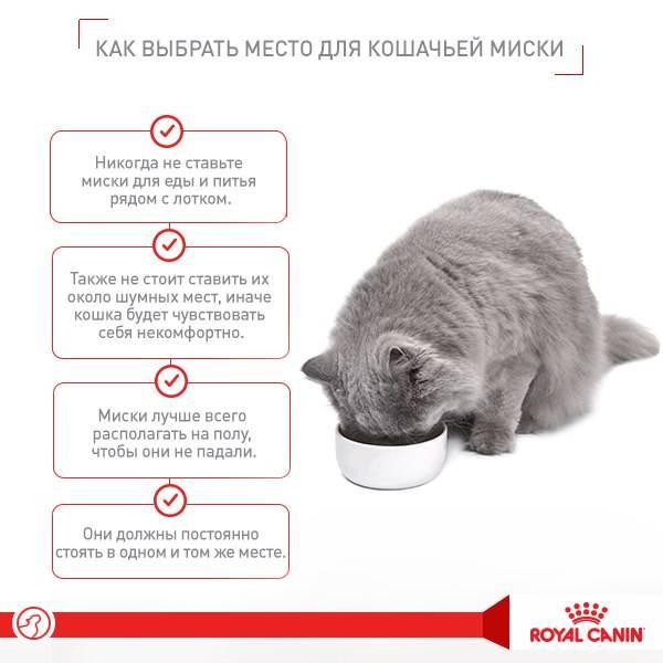 Как отучить котенка кусаться, царапать руки и ноги, когда его гладишь