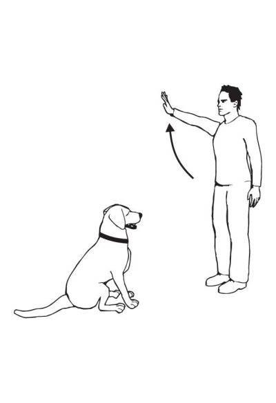 Подробное описание процесса дрессировки щенков и взрослых собак для новичков