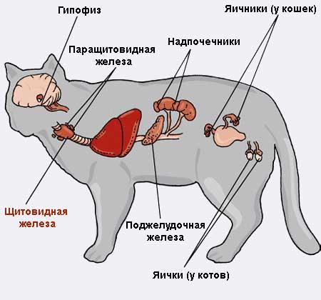 Почему у кота текут слюни изо рта: причины выделений, первая помощь, виды лечения