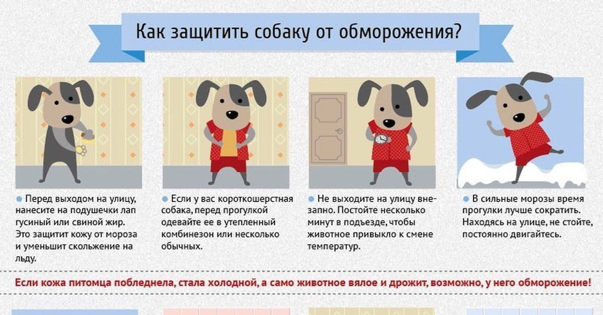 Как помочь собаке в жару: советы и рекомендации