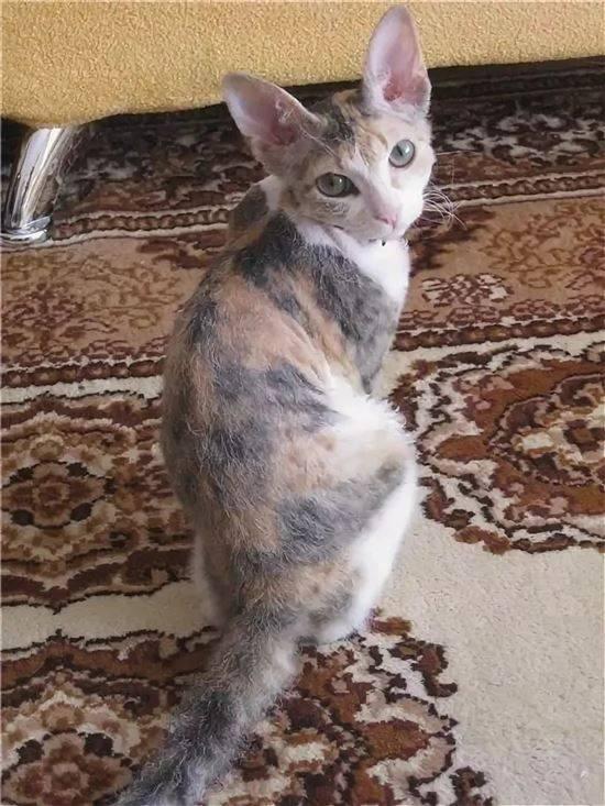 Кошки-метисы: описание породы, характер, советы по содержанию и уходу, фото