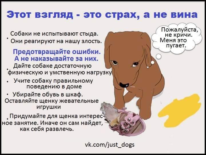 Собака - друг человека или верный слуга вожака стаи?
