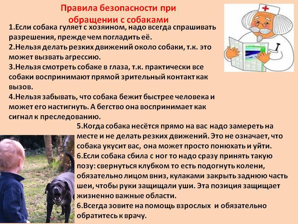 Когда кормить собаку до или после прогулки: правила выгуливания