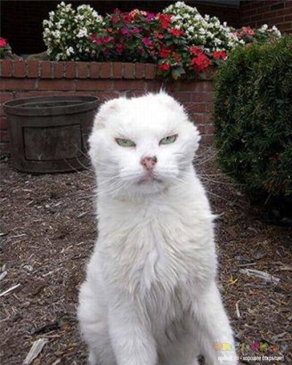 Страшные кошки: бедные существа и эксперименты генетиков. страшные породы кошек страшные котята