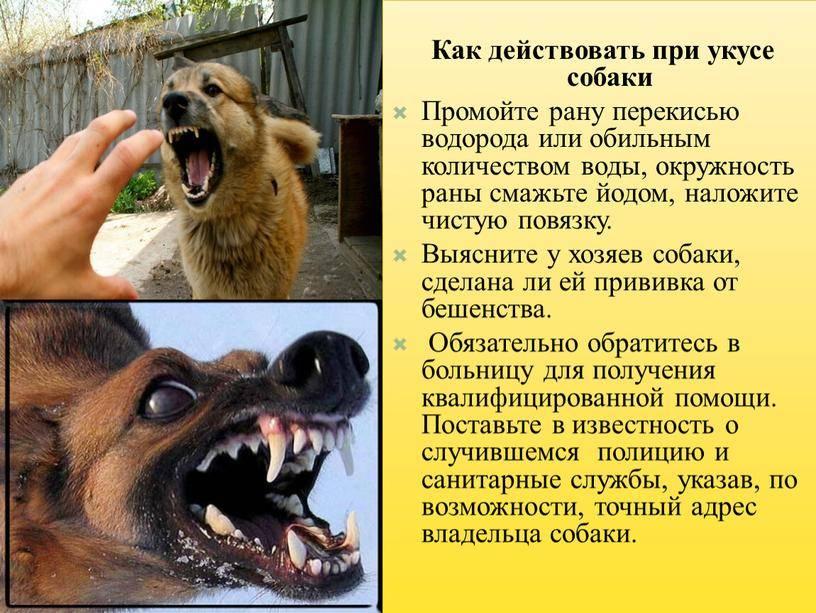 Что делать, если укусила собака