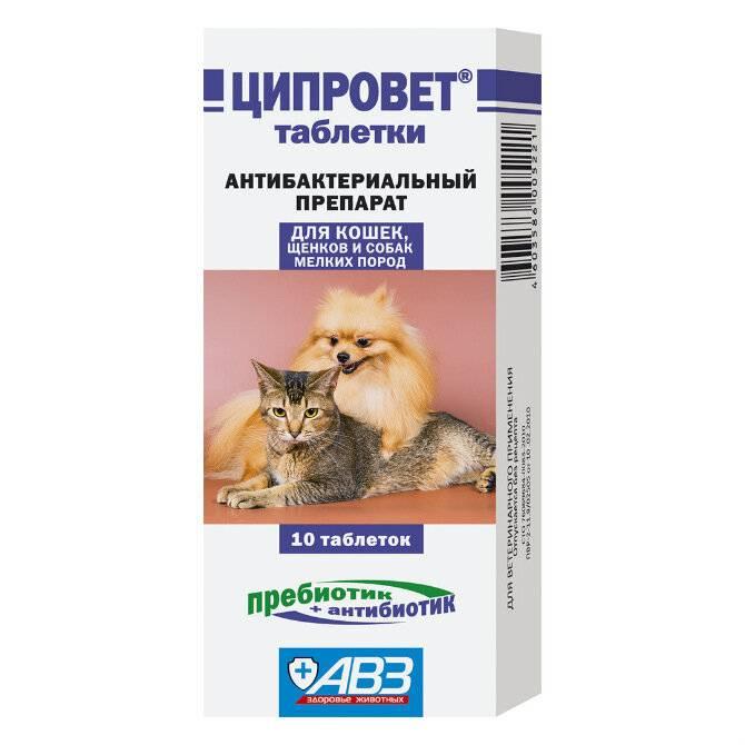 Какое обезболивающее можно дать коту при боли в животе