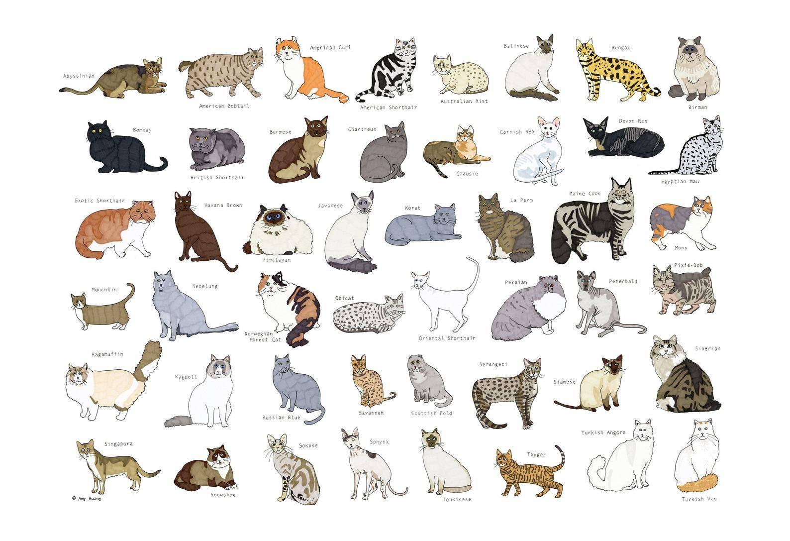 Какую кошку лучше завести в обычной квартире