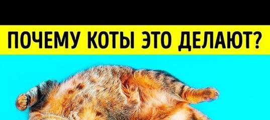 Кошка катается на спине: что это значит кошка катается на спине: что это значит