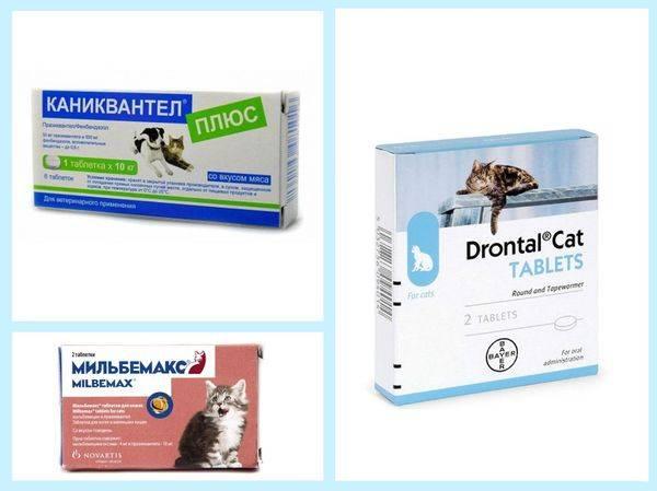 10 обезболивающих препаратов, которые можно дать кошке или коту