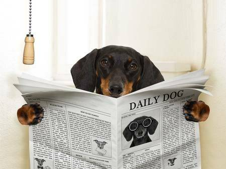 «тыкать щенка носом в его лужи — самый вредный совет»: интервью со специалистами по поведению собак