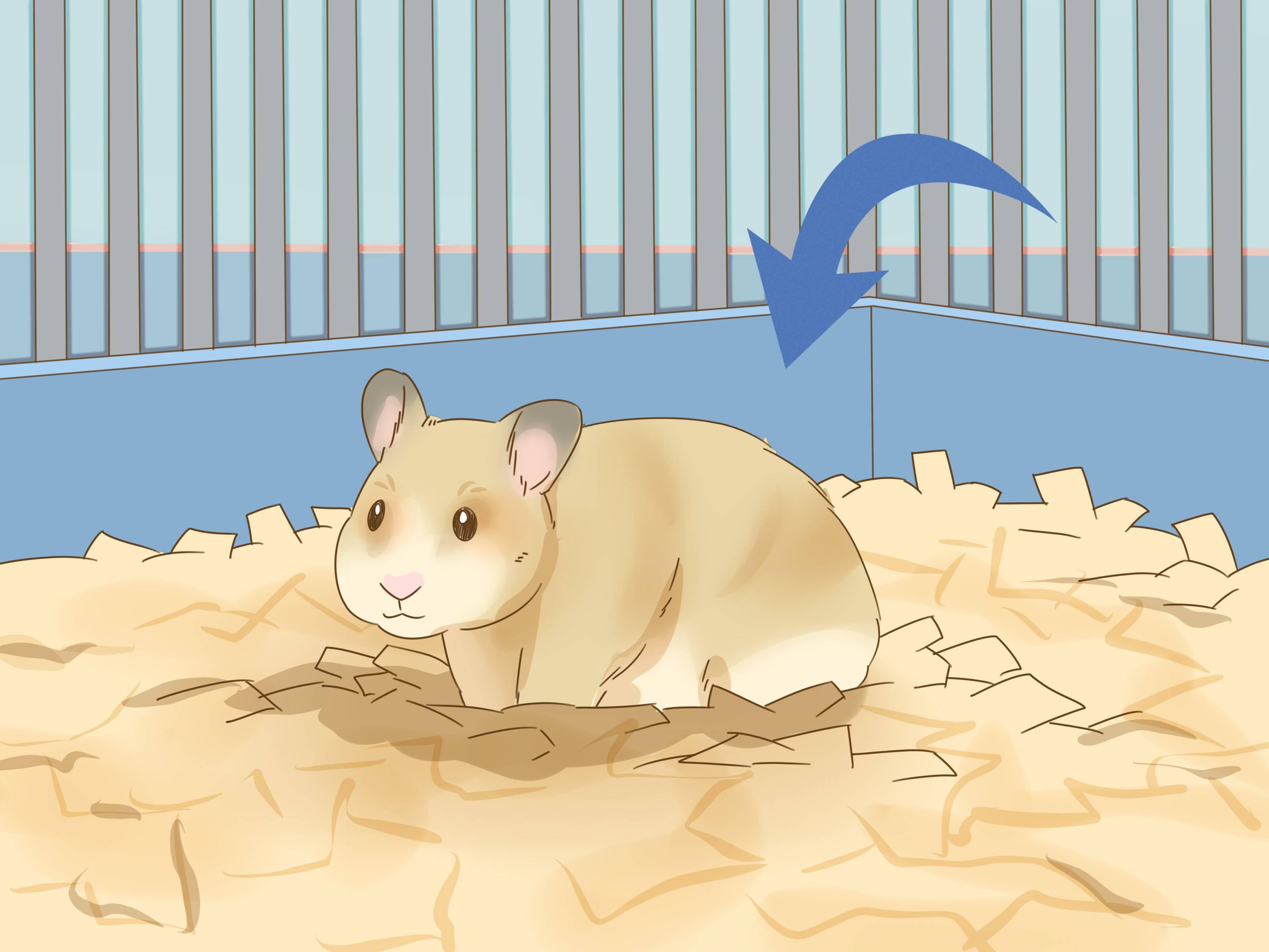 Если сбежал из клетки хомячок: где и как его искать в квартире