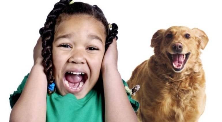 Как отучить собаку лаять на прохожих: действенные способы