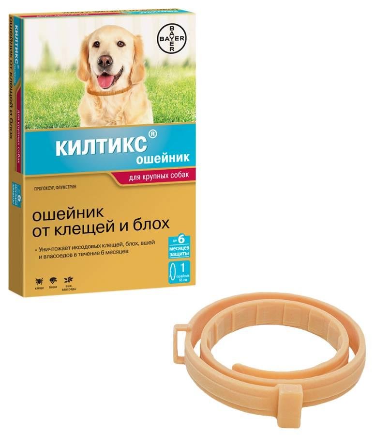 Выбор эффективного ошейника для собаки против клещей и блох
