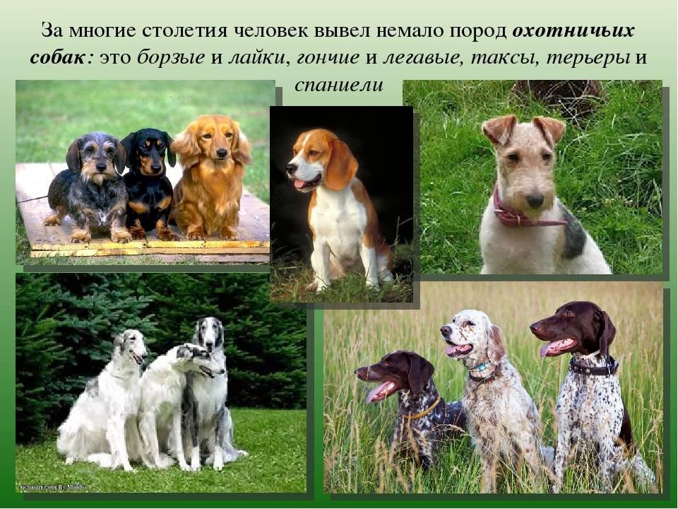 Сколько в мире пород собак? сколько собак живет во всём мире сколько видов пород собак существует в мире.