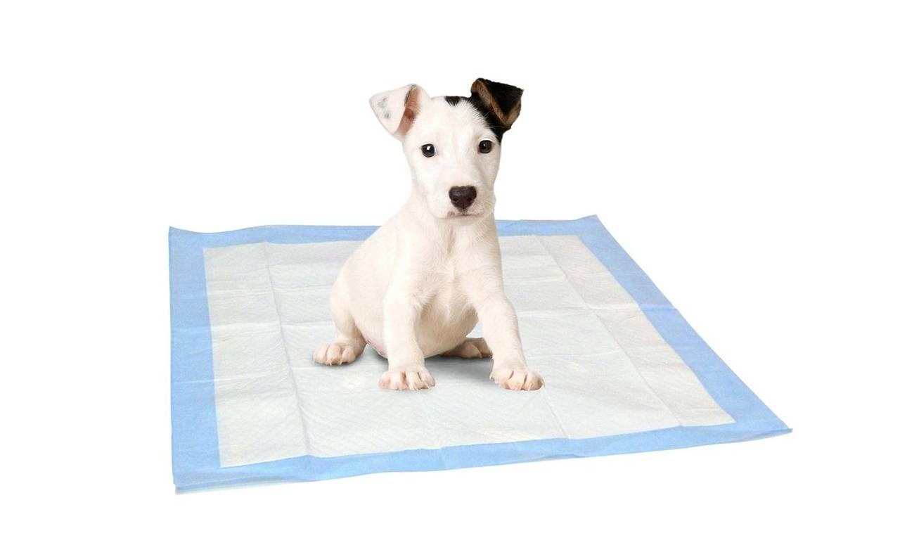 Как приучить щенка ходить на пеленку в туалет в квартире