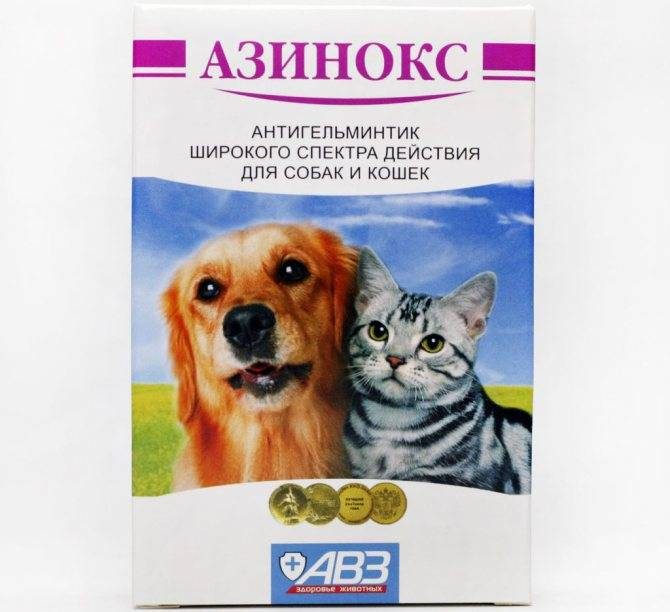 Можно ли азинокс плюс для собак давать кошкам: картинки, медикаменты, причины и диагностика, разновидности болезни