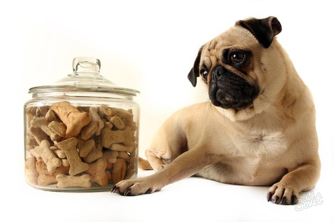 Как и чем кормить щенка мопса: меню по возрастам