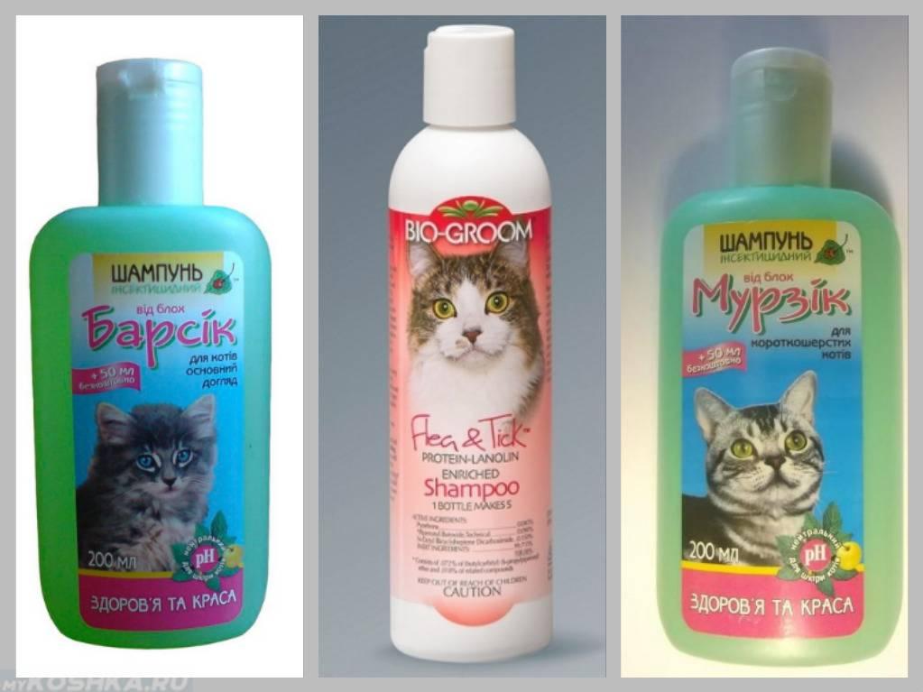 Как мыть сфинкса: как приучить котенка, частота и правила проведения водных процедур