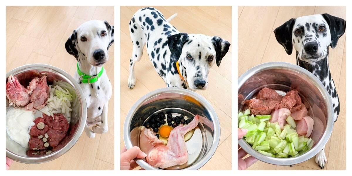 Как правильно и чем кормить собаку на натуралке в домашних условиях