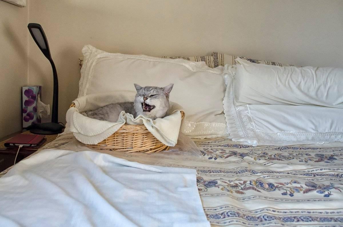 Причины почему кот гадит на постель: варианты как отучить и что делать с питомцем