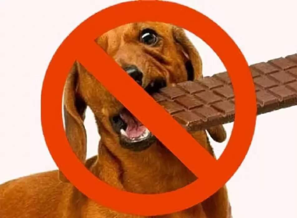 Можно ли давать собаке конфеты: что делать, если щенок любит есть их вместе с коробкой, фантиками и фольгой? почему нельзя кормить шоколадными и карамельными и что будет?