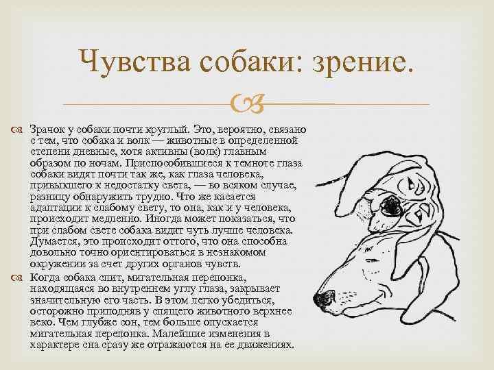 Как видят собаки наш мир