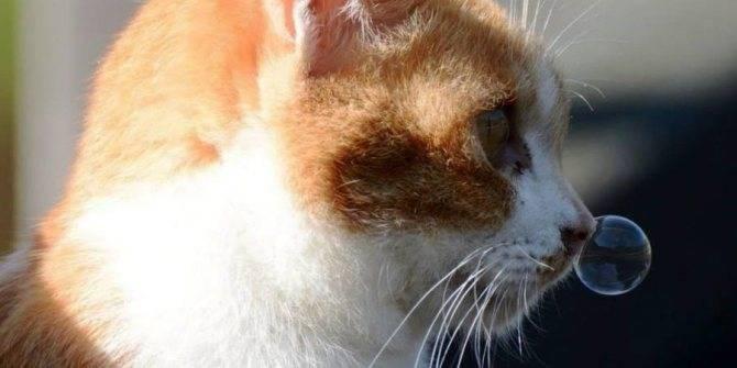 У кошки зелёные сопли и чихает как лечить в домашних условиях