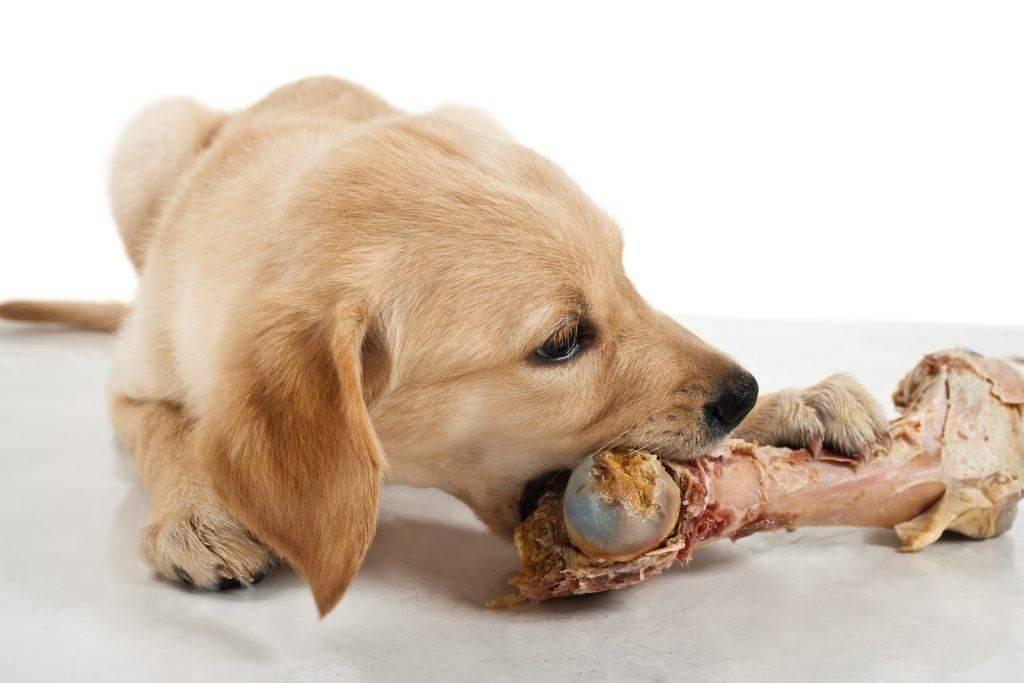 Можно собакам картошку?
