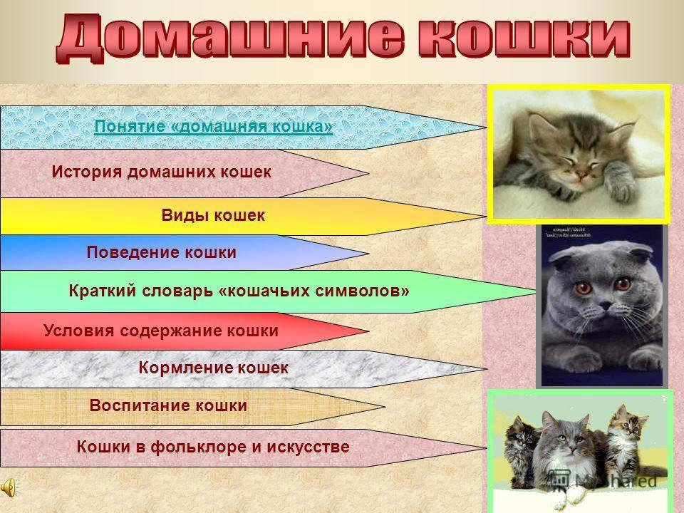 Реферат - особенности поведения домашних кошек.