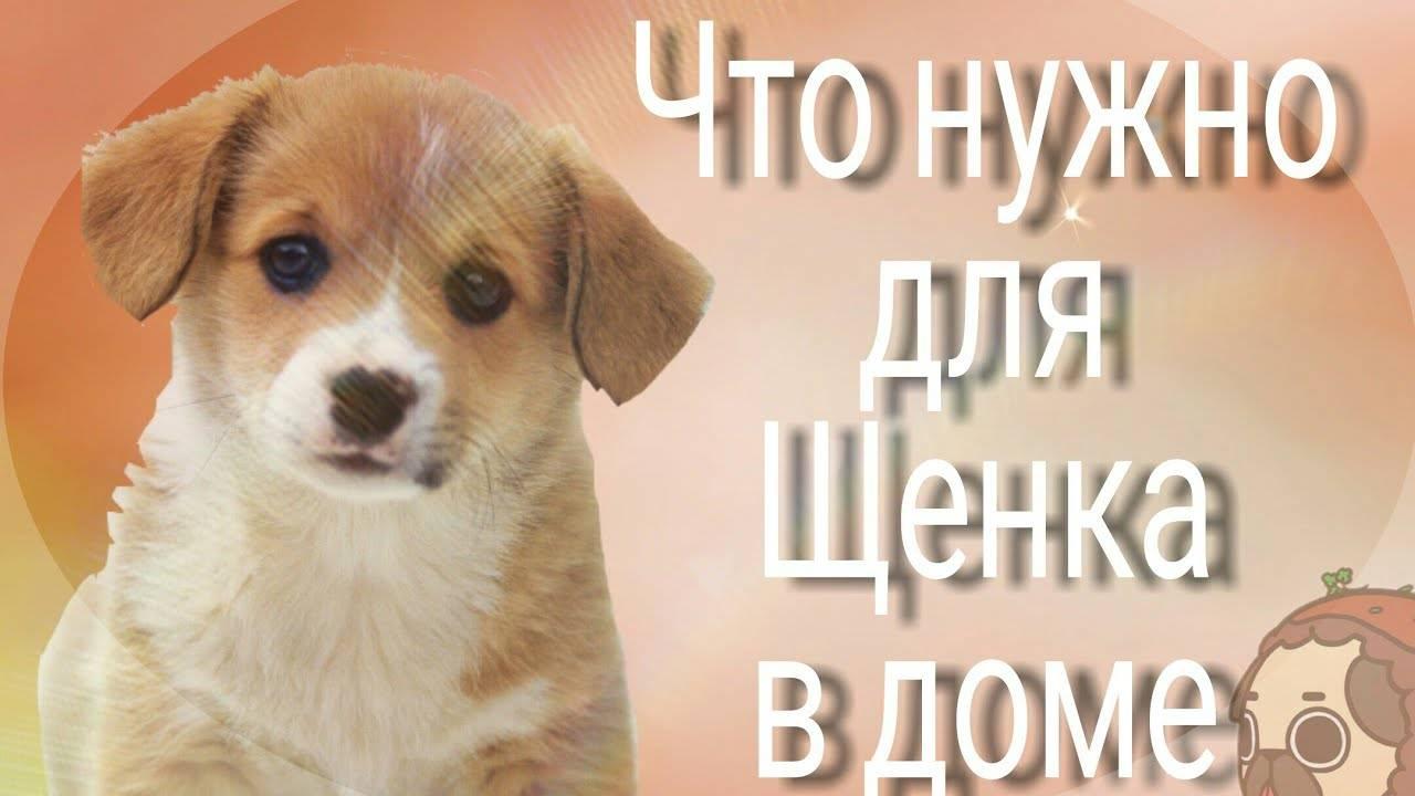 Лучшие собаки для содержания в квартире