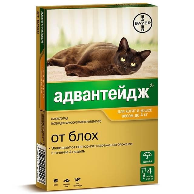 «адвантейдж»: как применять для кошек